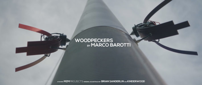 WOODPECKERS_COVER